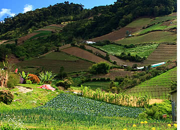 The highlands of Chiriqui is where most of Panama's fruits and vegetables are produced. Farm in Boquete.